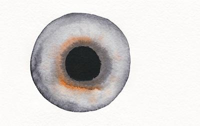 Augenillustration aus der