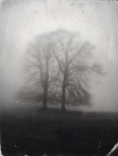 Baum in Schwarzweißeinstellung