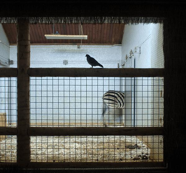 Lichtkontrast mit Blick auf einen Zookäfig