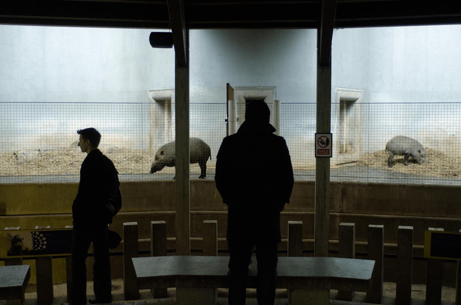 Lichtkontrast mit Blick auf zwei Personen, die Tiere in einem Zookäfig betrachten