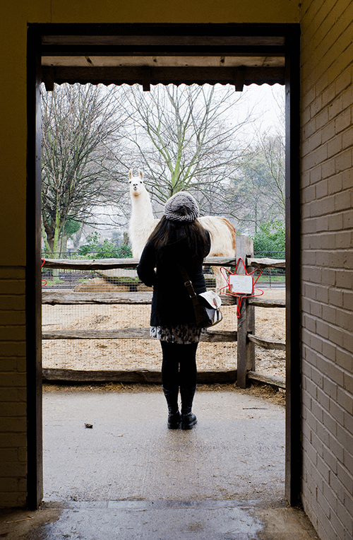 Lichtkontrast mit Blick auf einen Mädchen im Türrahmen vor einem Lama